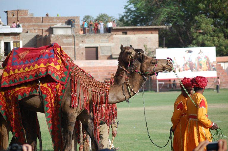 פסטיבל ביקנר הודו