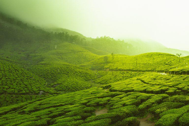 קראלה - דרום הודו